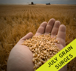 "Surging grain prices in July were ""historic"""